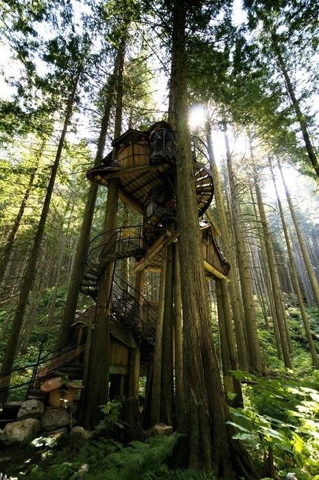 tree house design home - 6824120576