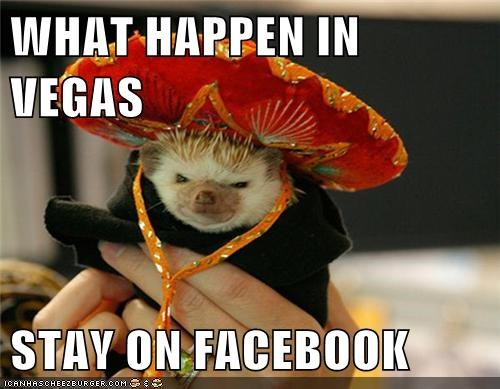 what happens in vegas,sombrero,facebook,angry,hedgehogs