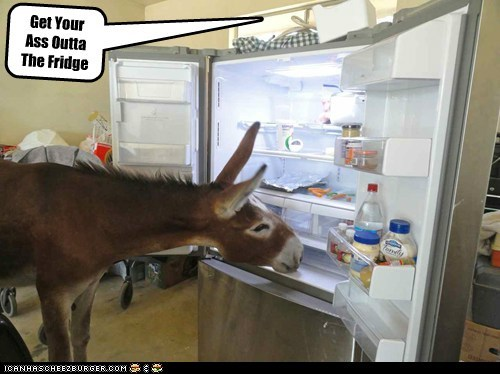 pun,donkey,refrigerator,ass,food,fridge