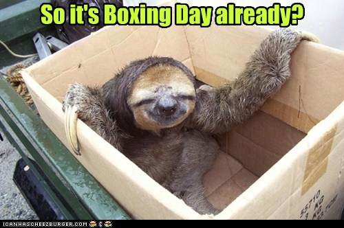 box,already,sloths,boxing day,sleeping