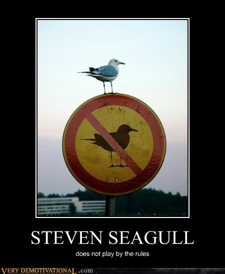 seagulls,Steven Segal,breaking the rules