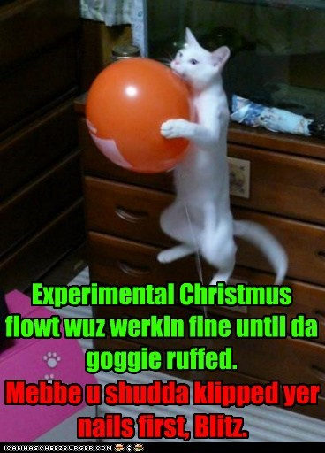 Experimental Christmus flowt wuz werkin fine until da goggie ruffed. Mebbe u shudda klipped yer nails first, Blitz.