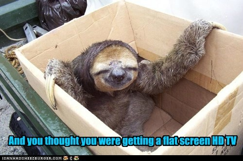 flat screen,surprise box,TV,sloths,delivery