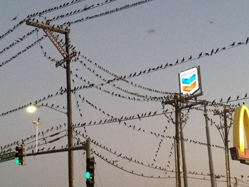 apocalypse bird the end is nigh