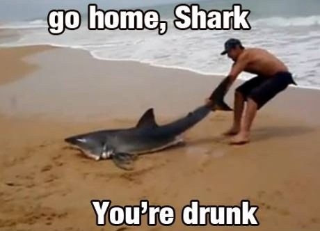 go home shark youre-drunk sea creatures beaches after 12 g rated - 6827165184