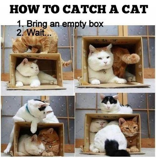 cardboard boxes,catch,traps,boxes,How To,Cats