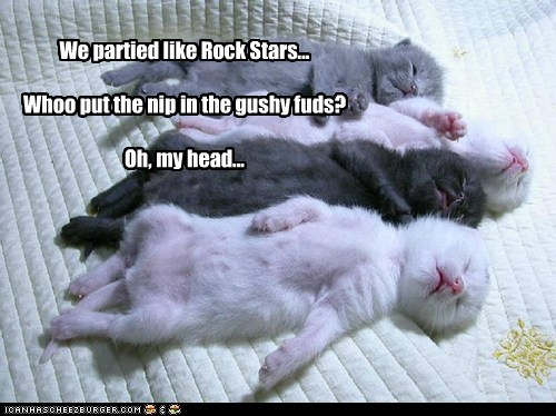 We partied like Rock Stars... Whoo put the nip in the gushy fuds? Oh, my head...