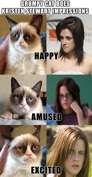 kristen stewart actor meme Grumpy Cat tard Cats funny animals expressions Memes - 6827211008
