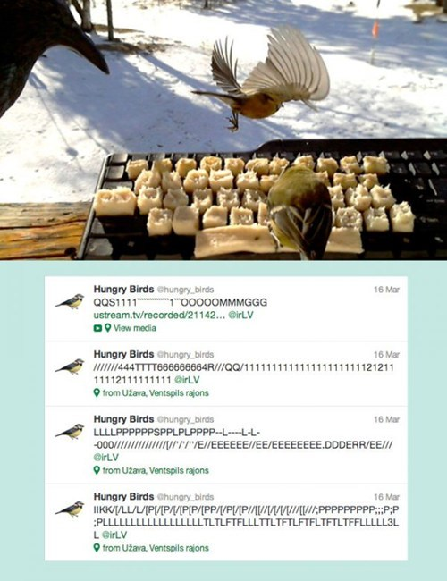 hungry birds twitter account Twitter Account hungry birds voldemars dudums latvia failbook g rated