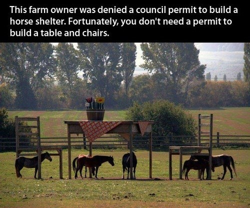 shelter,clever,creative,chairs,tables,permits,farms,stables,horses
