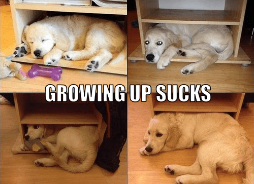 age sucks dogs boxes puppies growing up too big doesnt-fit - 6827264768