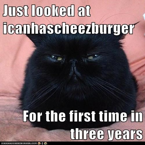 Cheezburger Image 6827806208