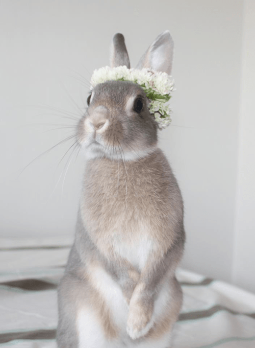 flower girl Bunday flowers rabbit bunny squee - 6827818496