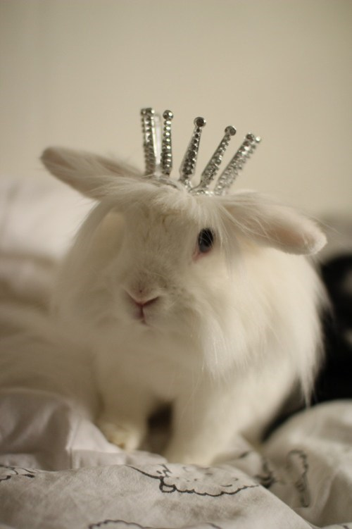 Bunday queen crown rabbit bunny squee - 6827844608