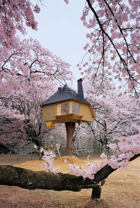 tree house tea Japan teahouse g rated destination win Hall of Fame best of week - 6828064256