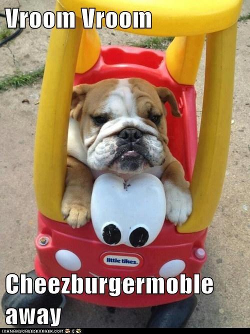 Cheezburger Image 6828217088