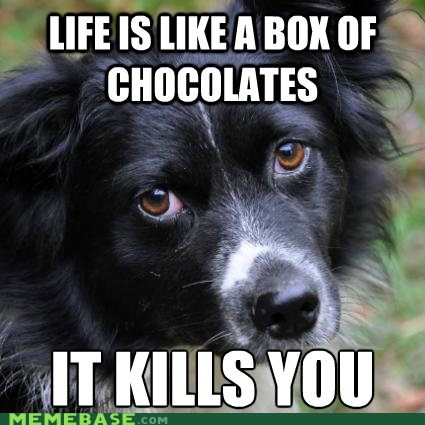 dogs,life,chocolates