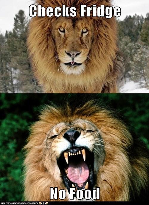 lions roaring angry food fridge check - 6828374016