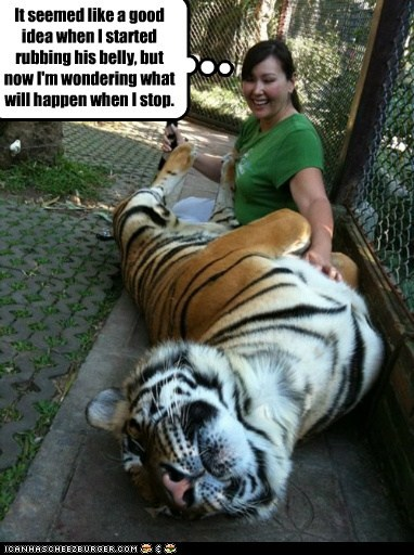 nervous,good idea,tigers,rubbing,belly,stop