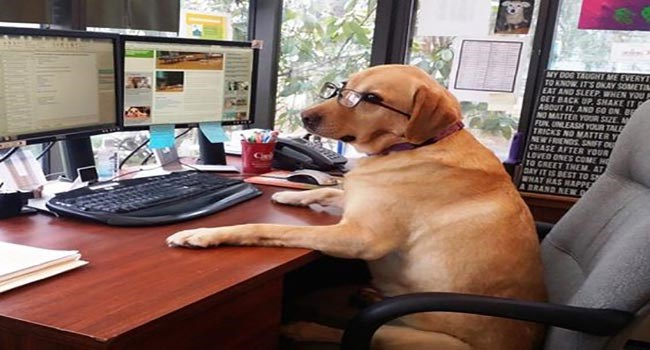 dogs that are good boys with good jobs