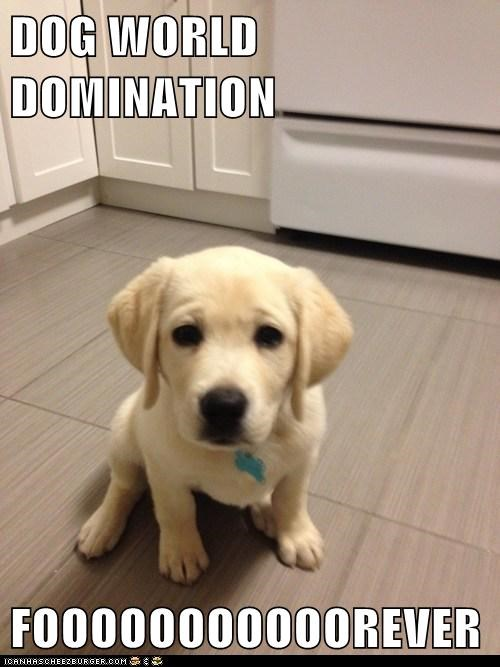 DOG WORLD DOMINATION  FOOOOOOOOOOOREVER