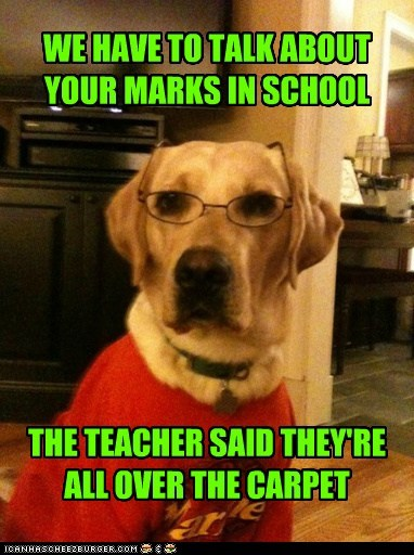dogs school glasses grades golden lab carpet