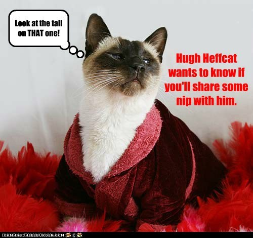 Hugh Heffcat wants to know if you'll share some nip with him. Look at the tail on THAT one!