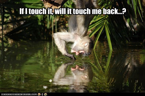 question monkeys touch water reflection wonder - 6829239552