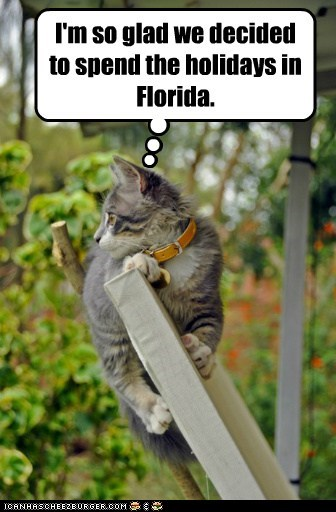 christmas 12 days of catmas captions florida Cats catmas - 6829634304