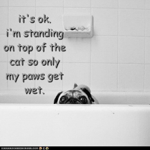 wet,dogs,pug,standing on shoulders,Cats,bath tub