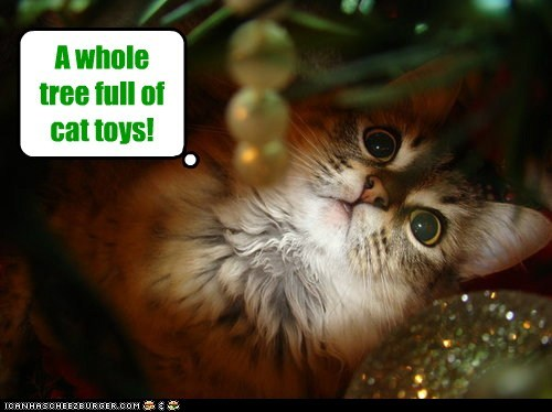 A whole tree full of cat toys!