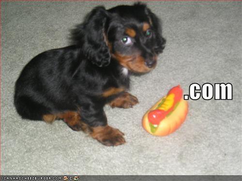 dachshund hotdog - 683017472
