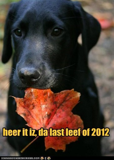 heer it iz, da last leef of 2012