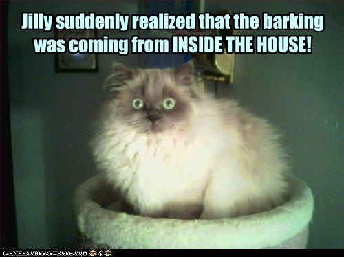 horror scary dogs house Movie captions hide Cats