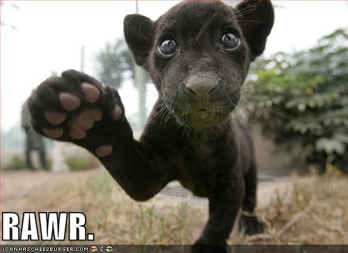cute lolcats panther rawr - 683110144