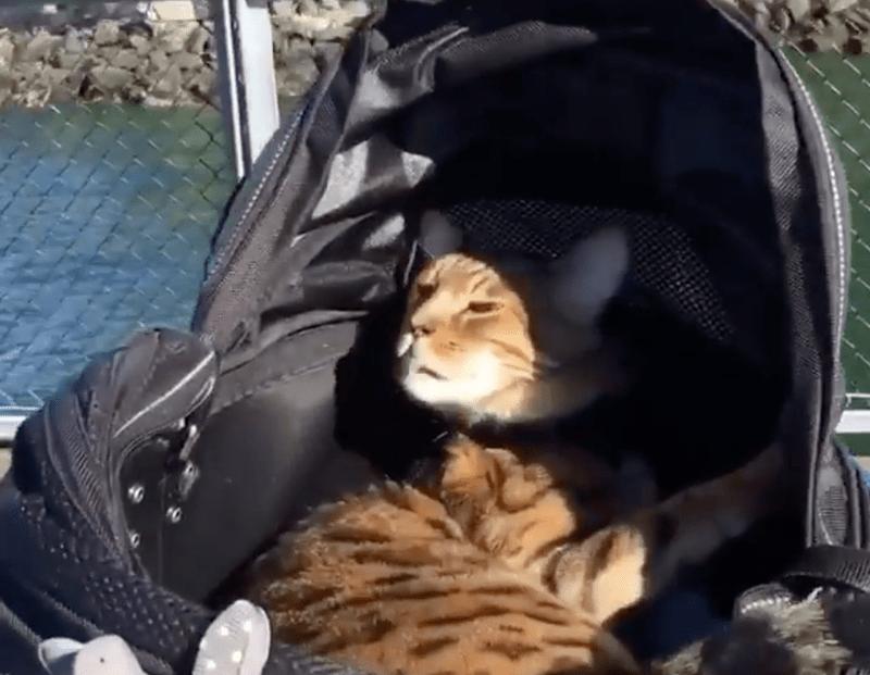 instagram cat videos Cats top 5 - 6831109