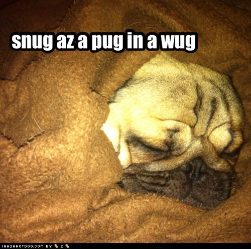 dogs pug rug blanket snug sleeping - 6831517952