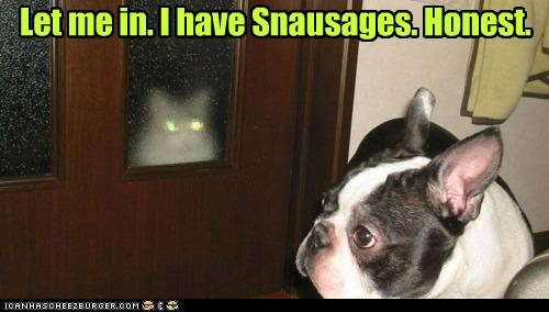 dogs,trust me,laser eyes,evil cat,boston terrier,snausages,Cats