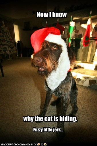 costume,christmas,dogs,what breed,santa hat,embarassing,holidays