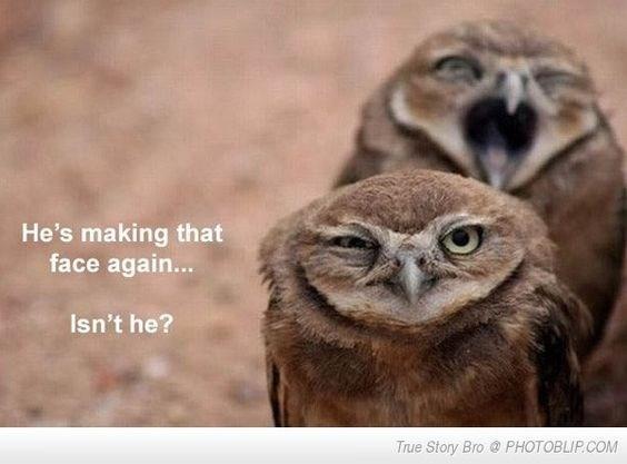 funny memes owls Memes love animal memes reasons - 6832133