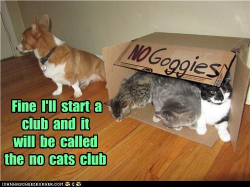 dogs,no goggies,clubhouse,club,mean cat,corgi,Cats,exclusive