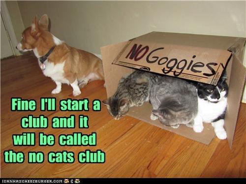 club mean cat corgi Cats - 6832481024