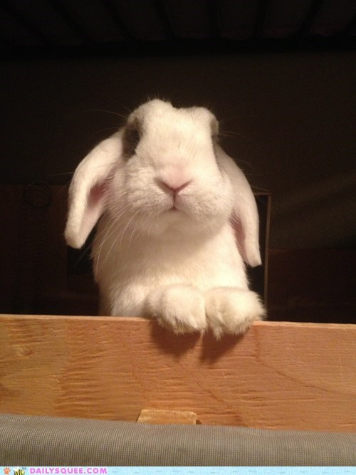 Bunday reader squee pet rabbit bunny squee - 6832543232