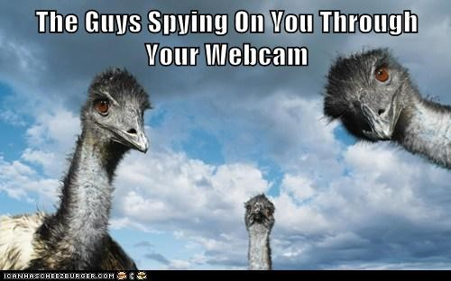 emus,conspiracy,webcam,spying