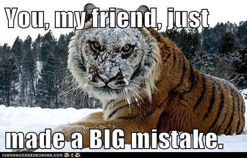 big mistake,snowball,tigers,angry