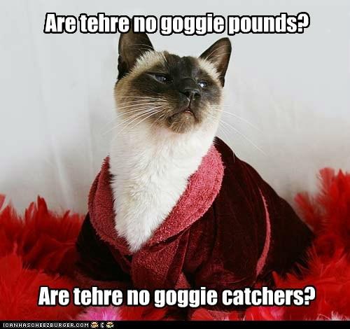 Are tehre no goggie pounds? Are tehre no goggie catchers?