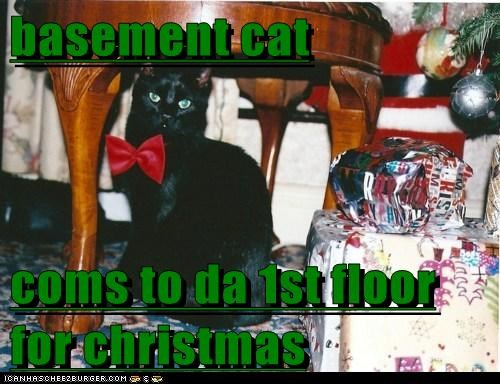 basement cat christmas 12 days of catmas captions Cats catmas - 6832988160