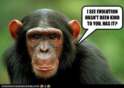 evolution,insult,ugly,chimpanzees