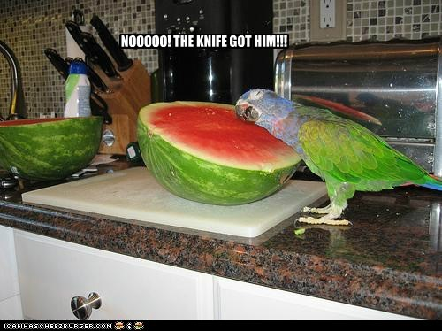 Sad,noooo,half,parrots,knife,dead,watermelon,cut