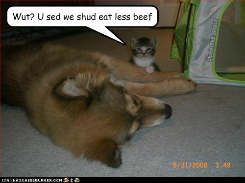 Wut? U sed we shud eat less beef Chech1965 021212